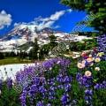 Отдушка Франция Альпийские цветы