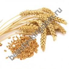 Масло Зародышей пшеницы нерафинированное