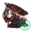 Сухоцвет Красная щетка корень