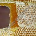Воск Пчелиный (натуральный)
