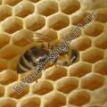 Воск Пчелиный (отбеленный)