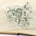Букет Гипсофилы цветочки