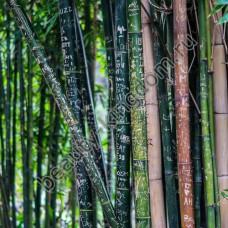 Экстракт Бамбука (сухой)