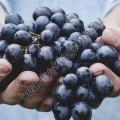 Скраб Виноградной косточки